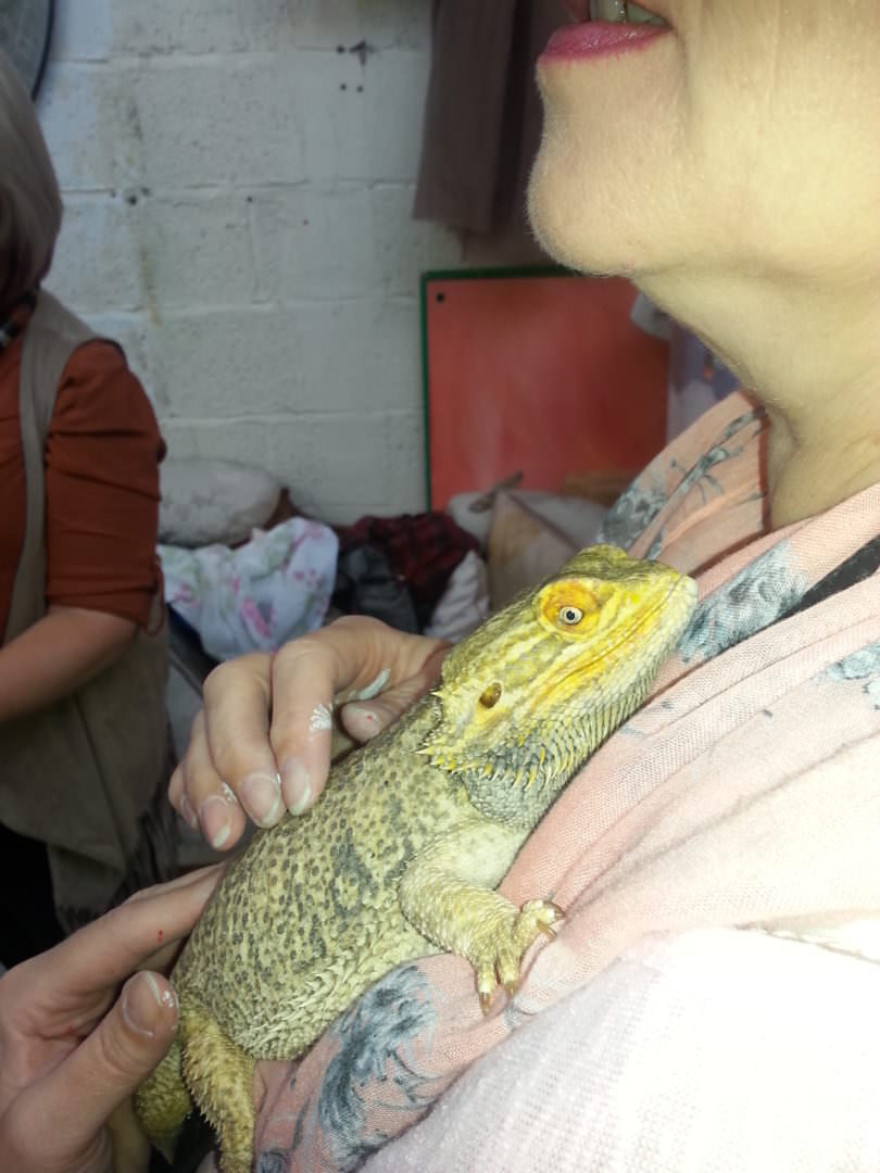 hugs for the bearded dragon